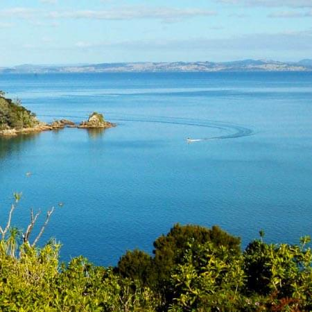 Doubtless Bay Charters - Fishing Charter Northland - Harbour cruises